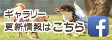 Dog&Cafe Noir(ノアール)|三重県志摩市・フェイスブックリンク